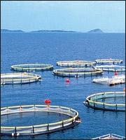 Ψάρια: «Στον αέρα» το deal Δία-Σελόντα -Στις τράπεζες οι τελικές αποφάσεις