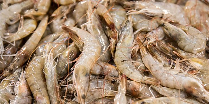 Κίνα: Εντοπίστηκε κορωνοϊός σε κατεψυγμένες γαρίδες!