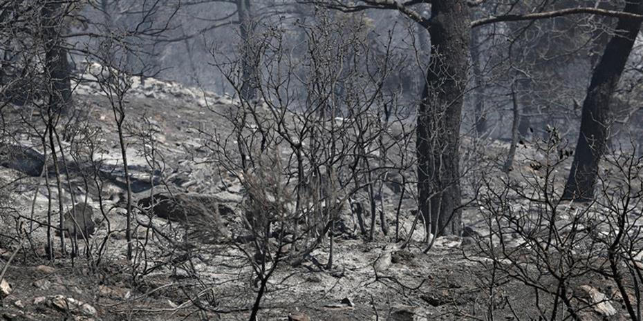 Βουλγαρία: Υπό μερικό έλεγχο φωτιά στο Χάσκοβο