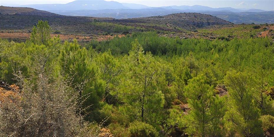 Νέος γύρος αναρτήσεων δασικών χαρτών για το 17% της χώρας