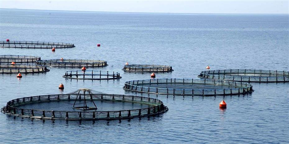 Ψάρια: Οκτώ ενδιαφερόμενοι για τις μονάδες Νηρέα-Σελόντα