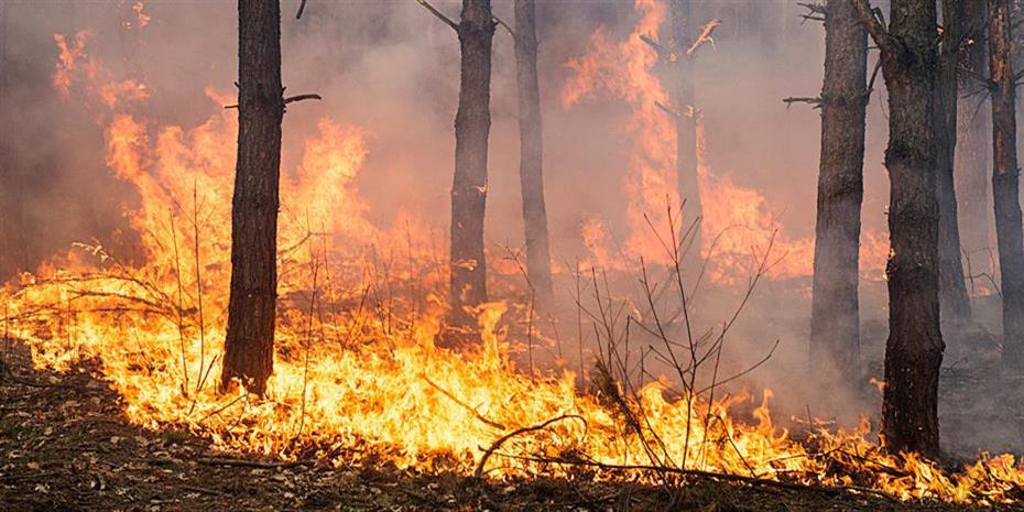 Οι ισχυροί άνεμοι αναζωπύρωσαν τις πυρκαγιές στην Πορτογαλία