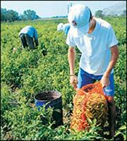 Αγρότες: Νέα αύξηση εισφορών από το 2018