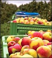 Φρούτα και λαχανικά καλλιεργούν οι Βρετανοί στις αυλές