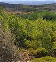 Ανοίγει ο δρόμος σε προσλήψεις για τους δασικούς χάρτες