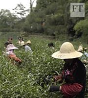 Αυτό είναι το ακριβότερο τσάι στον κόσμο