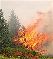Κόρινθος: Υπό έλεγχο η φωτιά στο Βασιλικό